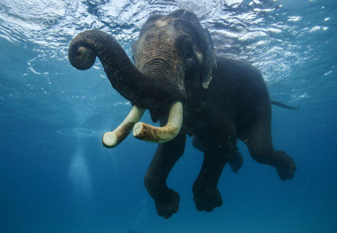 ภาพของน้องต้องโชว์ถึงความ elephant .. https://t.co/4ZQz5eJZyO