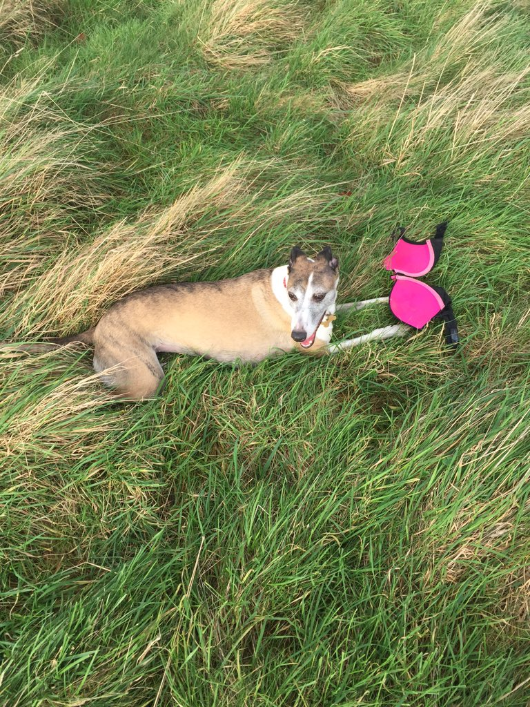If you recently lost a shocking pink bra in the Phoenix Park, my dog has found it. https://t.co/x4XzvhFGoP