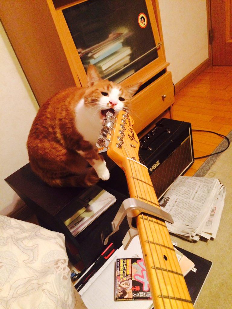 ギターをかみにくる猫 pic.twitter.com/QCkuxxnIHB