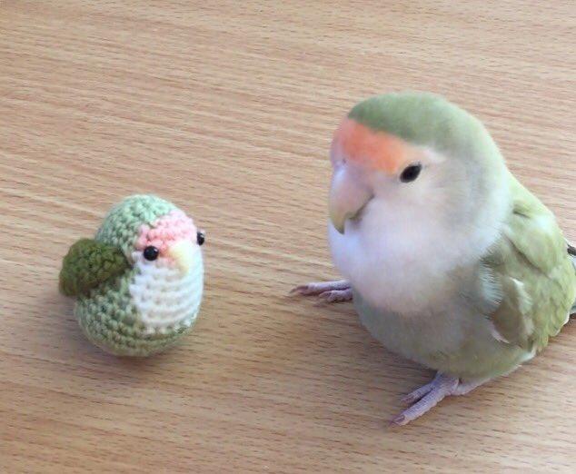 マロさんに新しいお友達が出来ました( ´͈ ᗨ `͈ )◞♡⃛ pic.twitter.com/LBHsI96xWJ