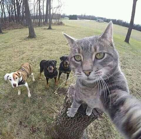 Selfie con lo perro https://t.co/mgxhXTJgZ2