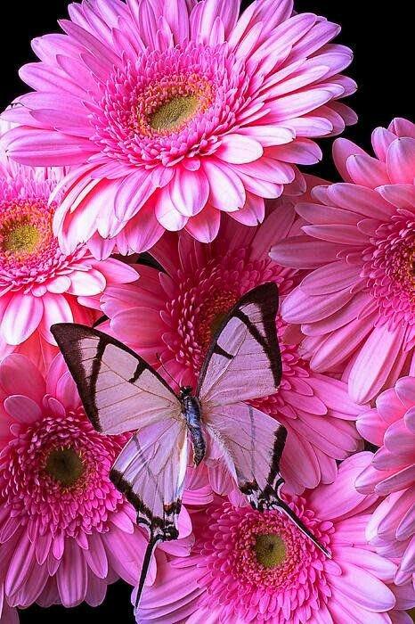 زهور البنفسج CWsLaDJWUAABYeJ