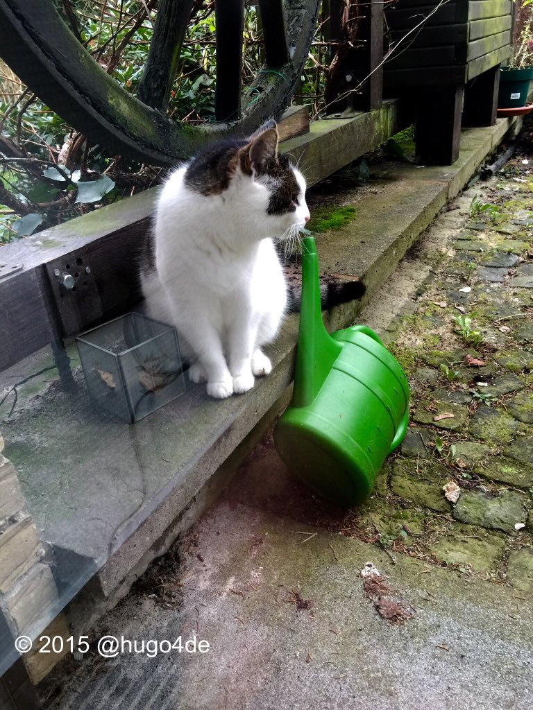 Lady Minky checking the dead watercan zombie @ozziecat1 🐾😎🎄 #zshq @Sprocket_Cool @ZeroRice1012 @ThorSelfies #unfug https://t.co/qFwBbDTufN