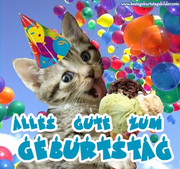 Geburtstagsbilder On Twitter Geburtstagsbilder Mit Katzen Https