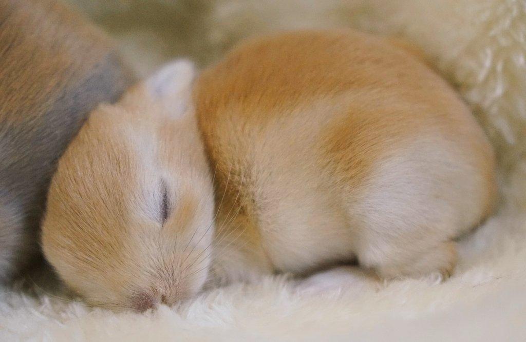 ベビーちゃんおやすみ~🌃 pic.twitter.com/fQvj2dcaJ8