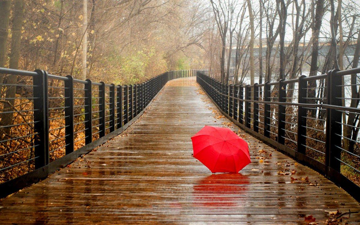 Sadia Malik On Twitter Good Morning And Happy Rainy Day