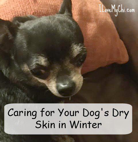 Your dog have dry skin this time of year? Here's how to heal it. https://t.co/2ur7TaJ8Mr #BayerExpertCare #ad https://t.co/msUQ6F5Py7