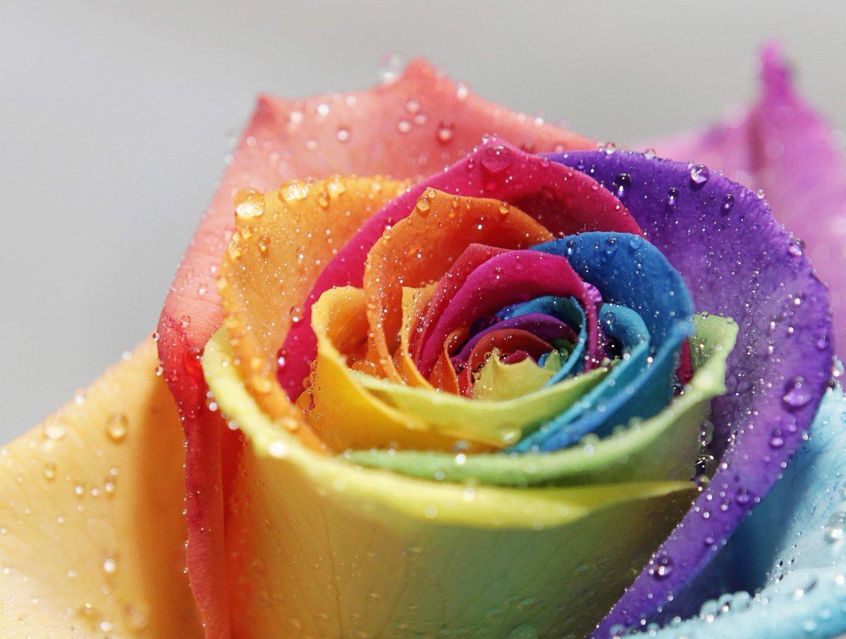 Картинки на телефон красивые цветы красочные, картинки