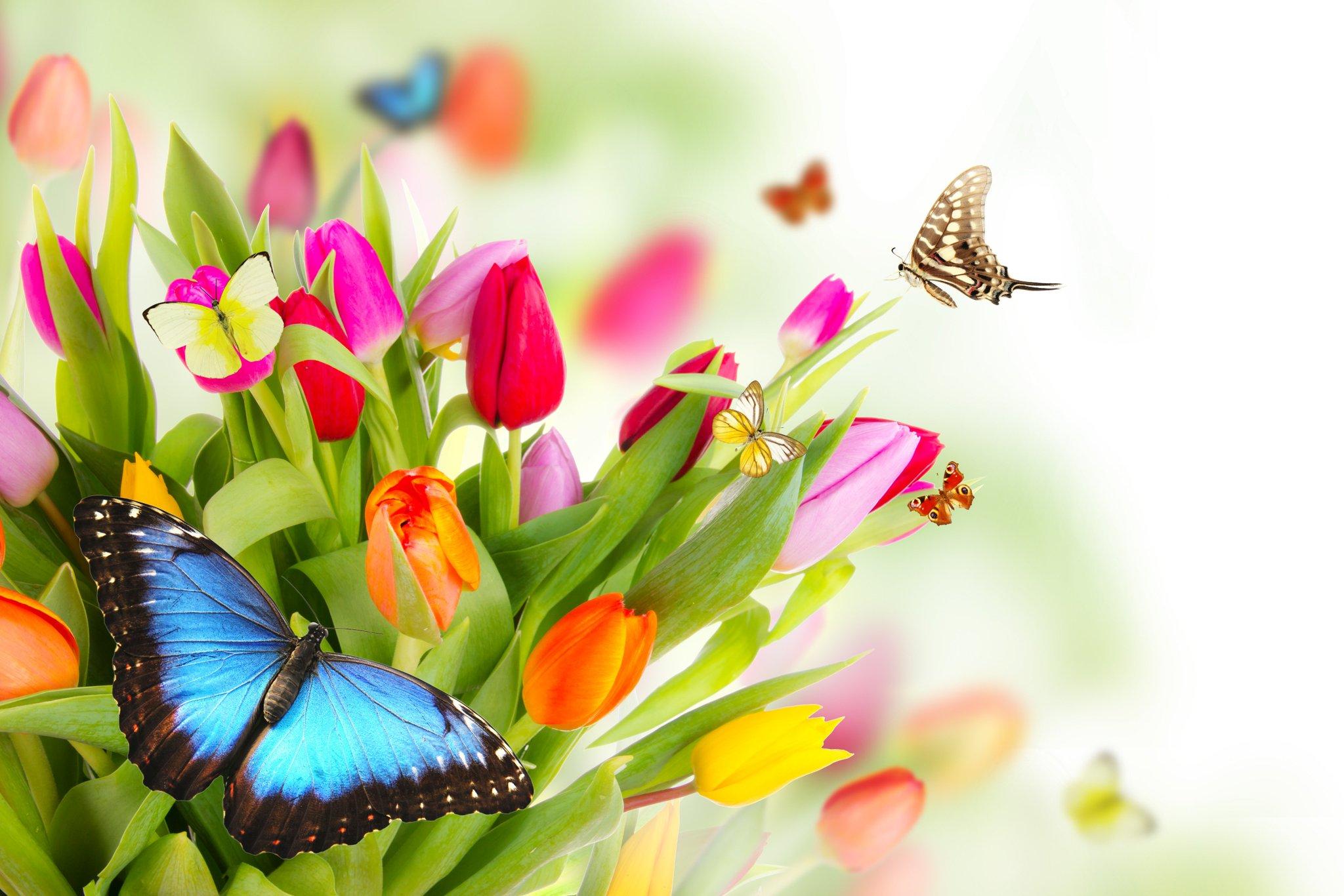 Мая, открытка с днем рождения с бабочками мужчине