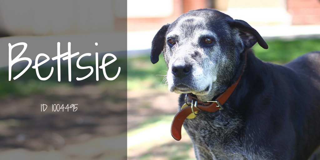 10yo Bettsie is a cuddly dog with nice manners. She's looking for a new place to call home! #AdoptASenior https://t.co/6pG4AjFACy