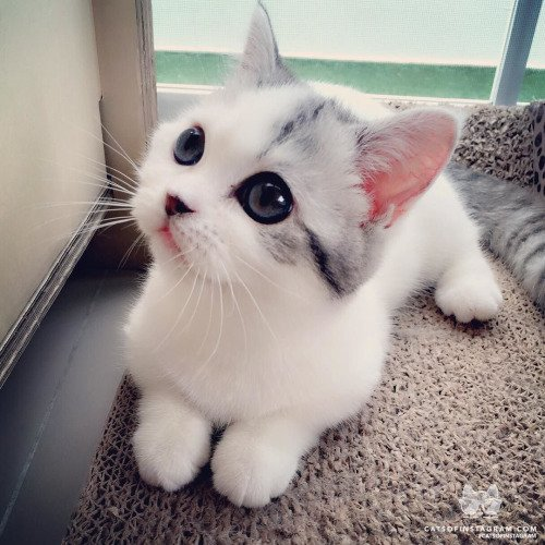 """Cute Cats on Twitter: """"Follow my tumblr: https://t.co/edHTCOm45K #cat #cute #cats #kitten #adorable https://t.co/KSD1EEvOpa"""""""