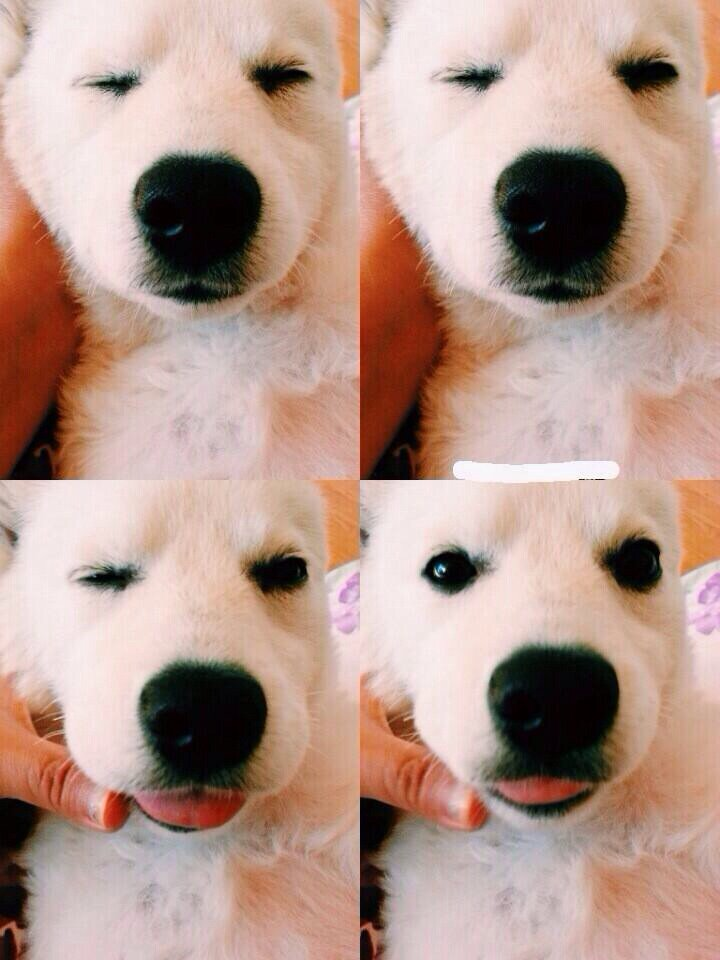 Rapmonster S Dog