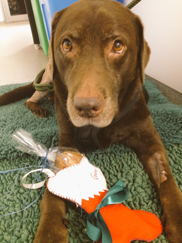 Santa paws has been to visit the best girl Coco @fitzpatrickref #nicenotnaughty #Fitzmas https://t.co/iwfy0L7m3C