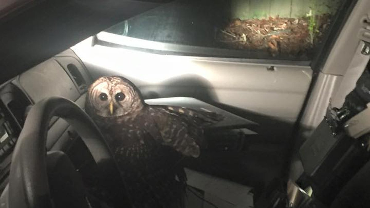 Louisiana police officer crashes after owl flies into patrol car, starts pecking at him https://t.co/3plclo4RIG https://t.co/jFTFuE2RVg