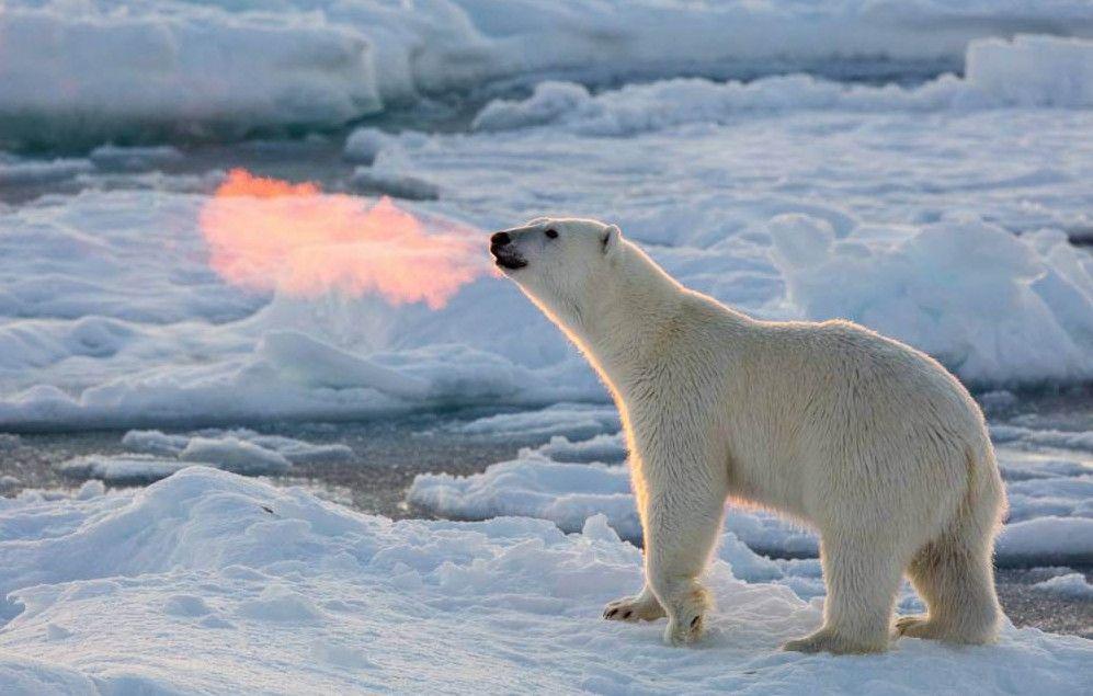 北極で口から炎を吐くホッキョクグマが激写されるmetro.co.uk/2015/12/25/wai…本当に炎を吐いているわけではなく、白い息が太陽光で紅く染まったもの^^ pic.twitter.com/Q8AiFBolPJ