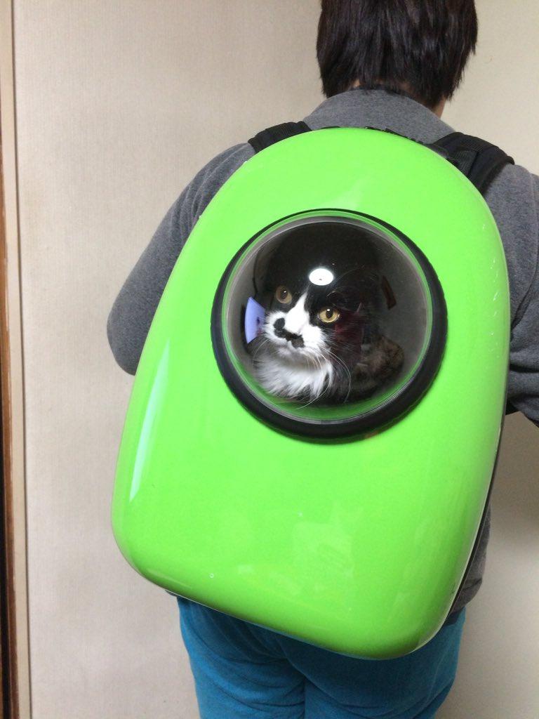 アメリカから、キャリーバッグ買ってみた。やはり、思ってた通り、かわいいなぁ。 pic.twitter.com/LCRkxQkjrq