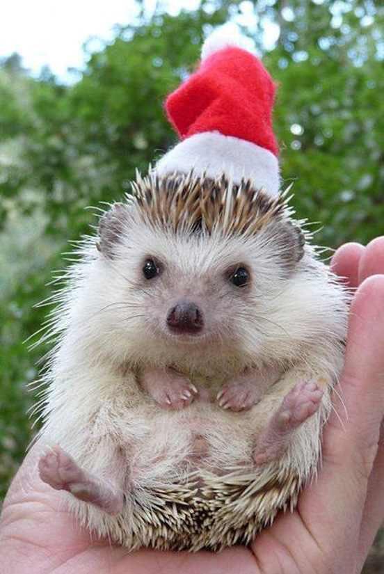 Things On A Hedgehog ThingsOnHedgie Twitter