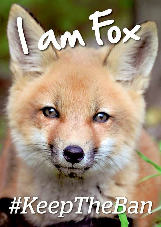 Retweet if you agree fox hunting has no place in a modern civilised society https://t.co/7C512CBNBw #KeepTheBan https://t.co/p0oCxJuBC9