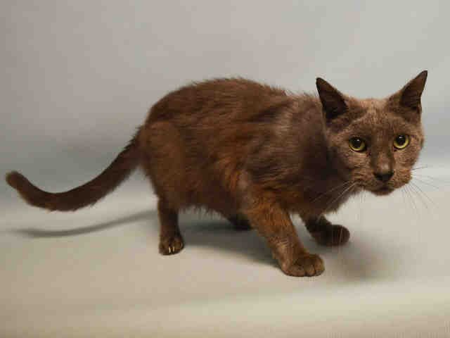 SUPER URGENT  PUBLICLY ADOPTABLE MANHATTAN!!! PLEASE KEEP SHARING!!! STONY - A0692429  ... https://t.co/AzZnKZdNWw https://t.co/G40Qfqob67