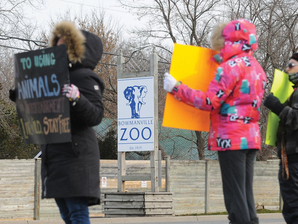 Protestors converge on @Bowmanville_Zoo over tiger whipping video @peta https://t.co/d4XwNnAFq2 https://t.co/D5JshE1LYM