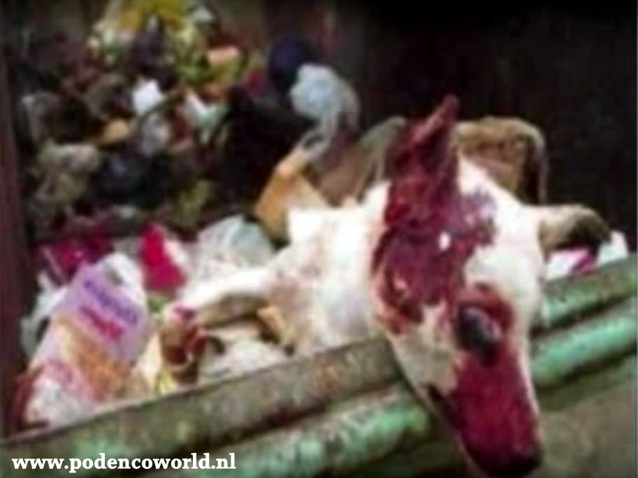 In Spain, podencos R viewed as objects that can B thrown away when no longer wanted #StopGreyhoundTorture https://t.co/r6jEJIhu0r