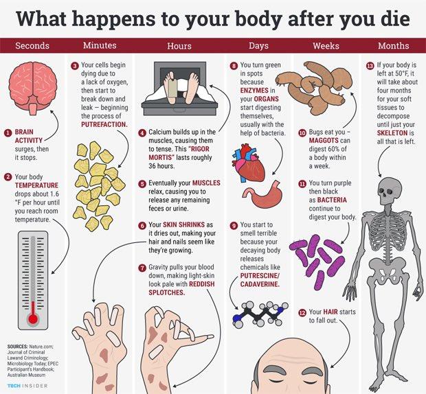 هذا ما يحدث لجسدك بعد الموت. تبرع بأعضائك لإنقاذ حياة مريض أو للبحث العلمي بدلاً من تركها للدود والبكتيريا https://t.co/rm8tg2G47M