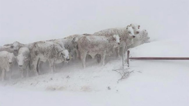 30,000 cows died in Texas during winter storm #Goliath https://t.co/vb89BNDnnK #blizzard