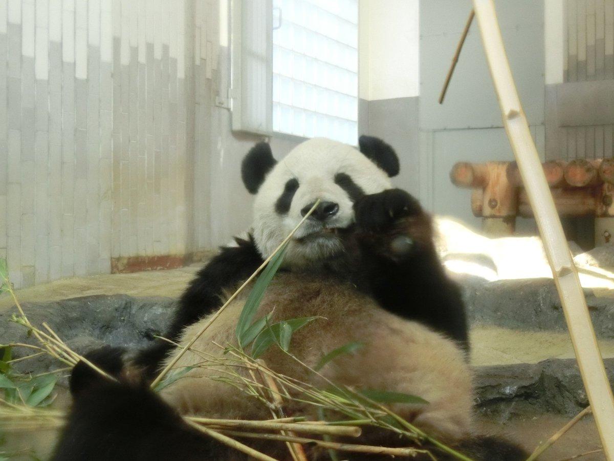 おはようございます\(・ω・)/皆さんまだまだせわしない年始をお過ごしでしょうか。でもそんなときこそどっしりと構えていきましょう。そう、パンダのリーリーのように。 pic.twitter.com/Gw0mqh0NeT