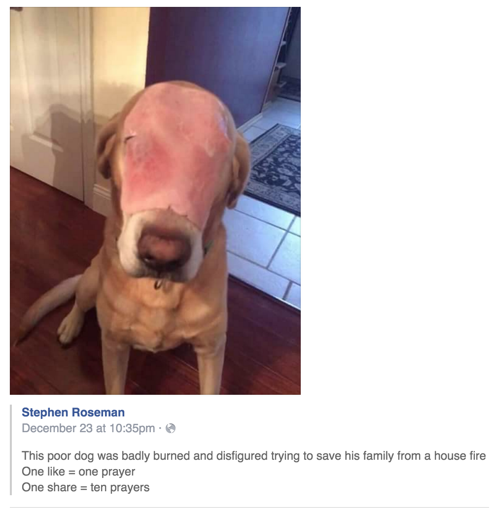 people on facebook are praying for a dog with a slice of ham on its face thinking it was injured in a house fire https://t.co/piW9ByWiXA
