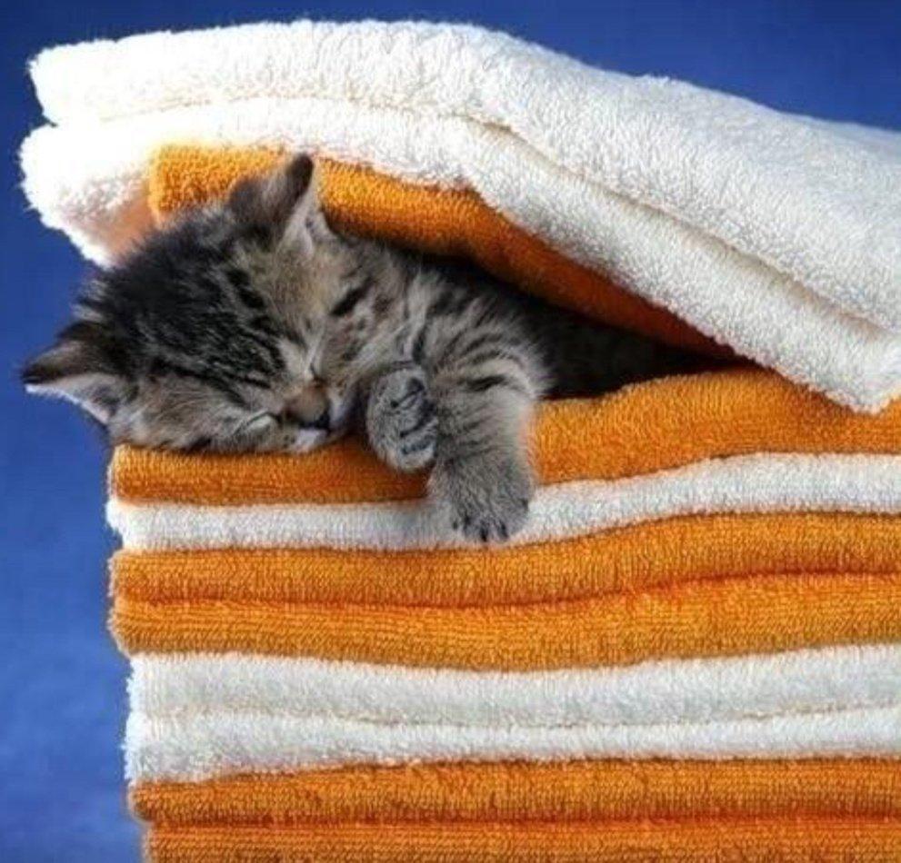 Котики смешные картинки спокойной ночи, чудо старинные открытки