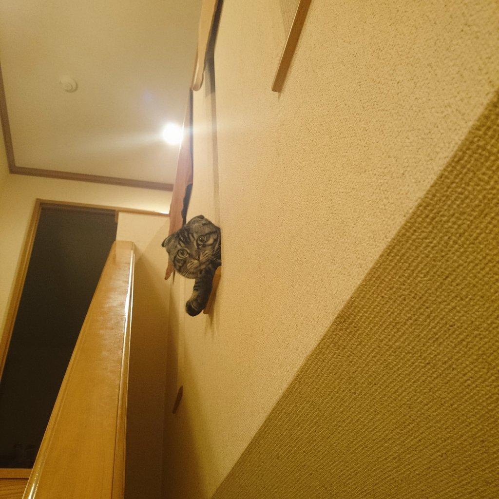 実家の階段がぬこ握手会場になっていた 2周した pic.twitter.com/BvUdlaCv4M