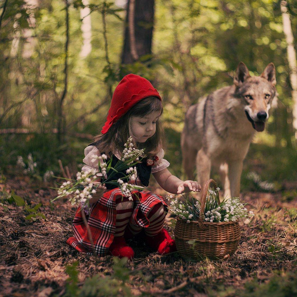 Картинки с красной шапочкой и волком, картинки следы ног