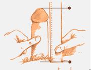 Penis girth definition
