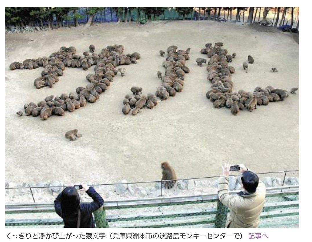 これホント、猿を200匹も集めて「サル」って文字作らせるってだいぶ狂ってると思うんだよ pic.twitter.com/PsxRtPy7r7