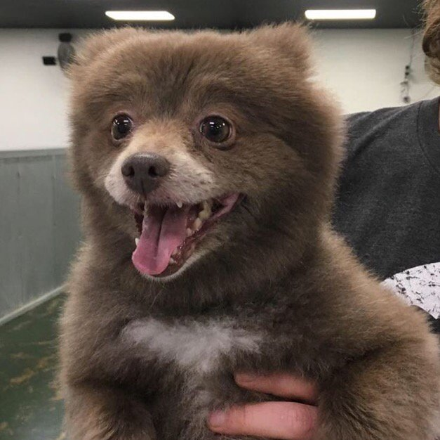 The Bear/Dog Creature That Stumped The Internet Has Been Identified