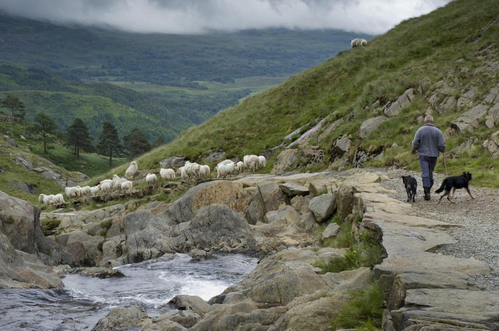Wales named one of the top 10 countries in the world to visit in 2016 @RoughGuides *chuffed* https://t.co/qshtVYGHH8 https://t.co/3UIDxfuYBS