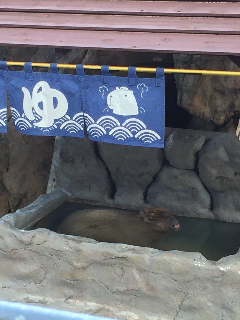カピバラは水の生き物だった https://t.co/kFWeImZKwG