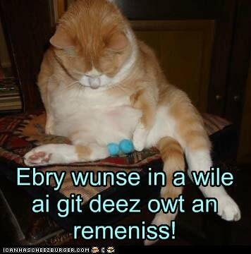 Funny Pet Photos On Twitter Funny Cat Neutered Reminisce - 16 funniest cat tweets 2016