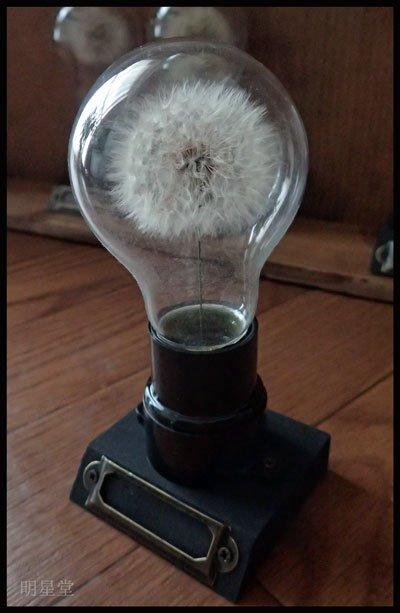 綿毛を電球とかに詰めてる #私がやってる創作をざっくり言う pic.twitter.com/EXiBeThXlH