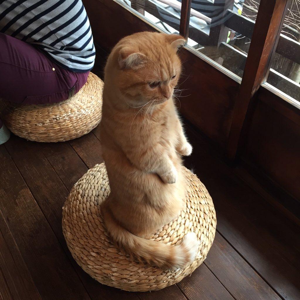 何度かお越しになられていらっしゃるお客様が、ウニちゃんのたっち、まだ見たことないんです、と仰った瞬間スックと立ち上がる。今日は仕事のできる子、ウニちゃん。 pic.twitter.com/ffg9JnCOpH