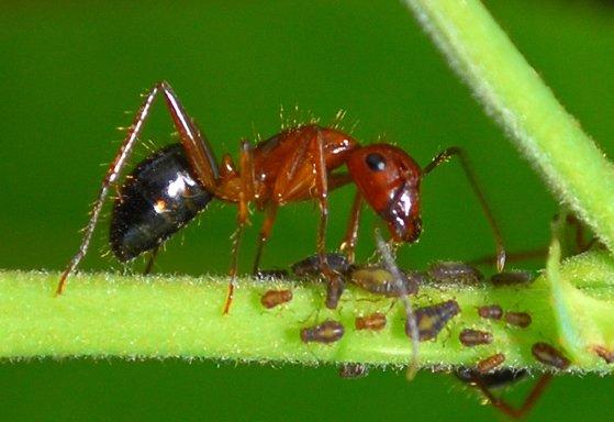 Des #fourmis reprogrammées par #épigénétique !