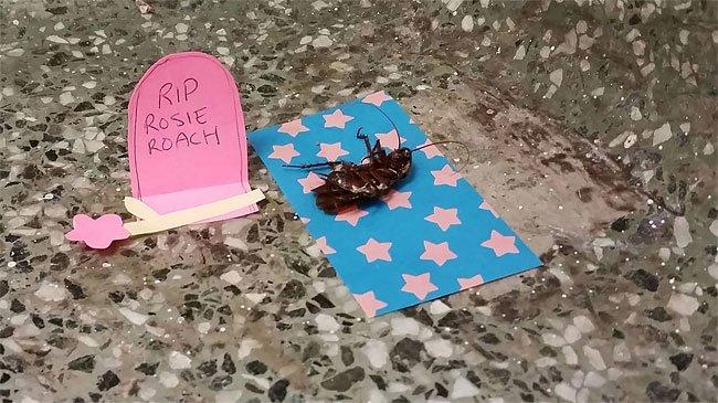 Üniversitenin antropoloji koridorundaki böcek ölüsü bir türlü temizlenmeyince olaylar gelişmiş. https://t.co/RpFArpajqW