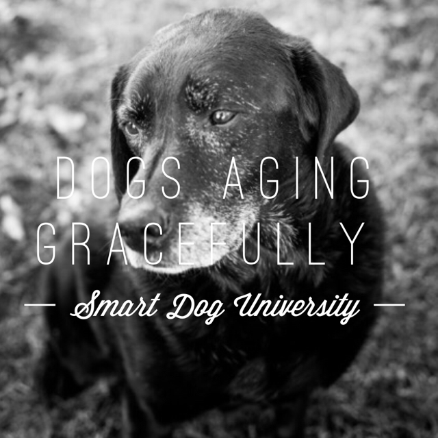 [New!] Dogs Aging Gracefully. We have 3 aging dogs - here's how we're helping ours. https://t.co/Ybjb2Z6u3X https://t.co/86kSbo6kyJ