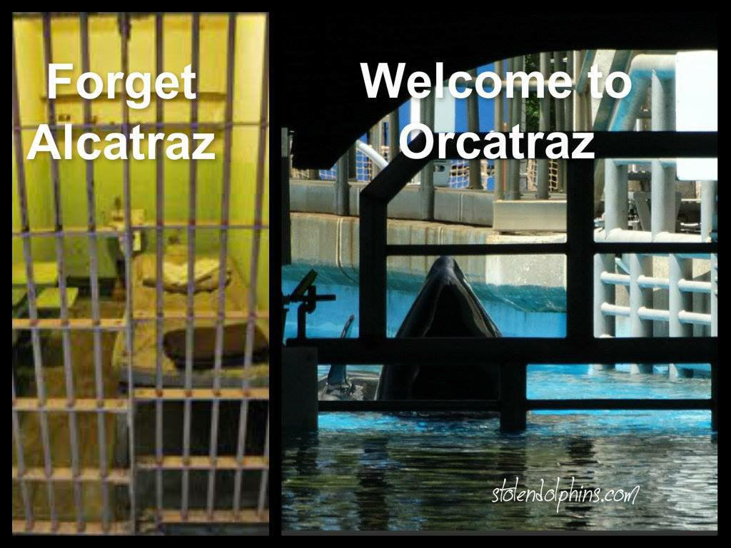 #SeaWorld should find a way to safely return orcas to the ocean https://t.co/TtuqM3oa5o  #Blackfish need #sanctuary https://t.co/0KEWoQYo6C