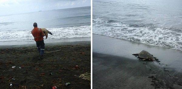 Homens compram tartarugas marinhas para devolvê-las ao mar https://t.co/sZ4rkfqCom #MeioAmbiente