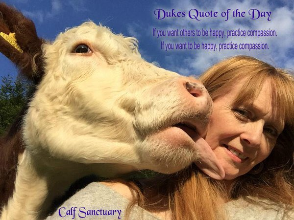 Save @C_A_L_F Sanctuary from closure & save Duke's life. Please chip in: https://t.co/fw3CQWo5RK #TeamDukeBullock