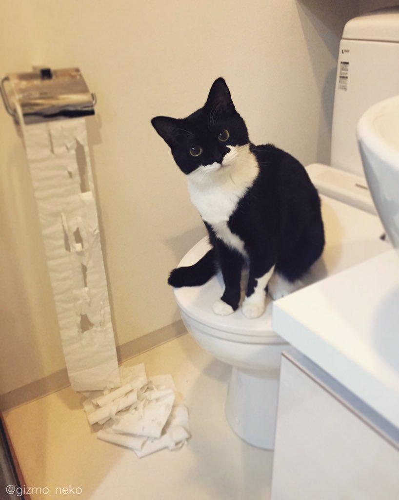 トイレのドアを開けた瞬間 崩れ落ちる飼い主