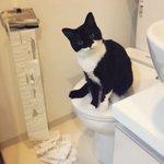 ネコ飼っている人が共感する【ネコあるある】!