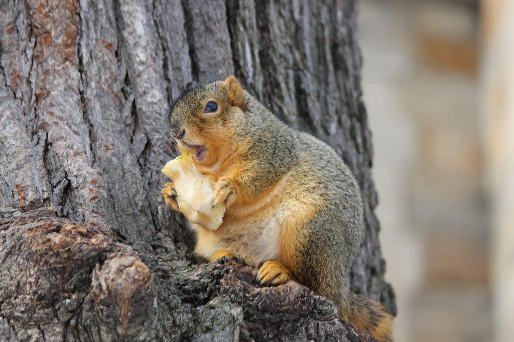 なんともふくよか。北米と英国で肥満リスが大量発生 暖冬で大変すごしやすく食料も豊富なせいでご覧の有様だよ