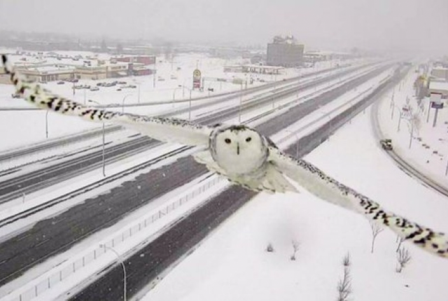 The decisive moment. QuebecTraffic Camera Accidentally Snaps Beautiful Photo of a Snowy Owl https://t.co/xNhVRlsptH https://t.co/8TTYTaGqeI
